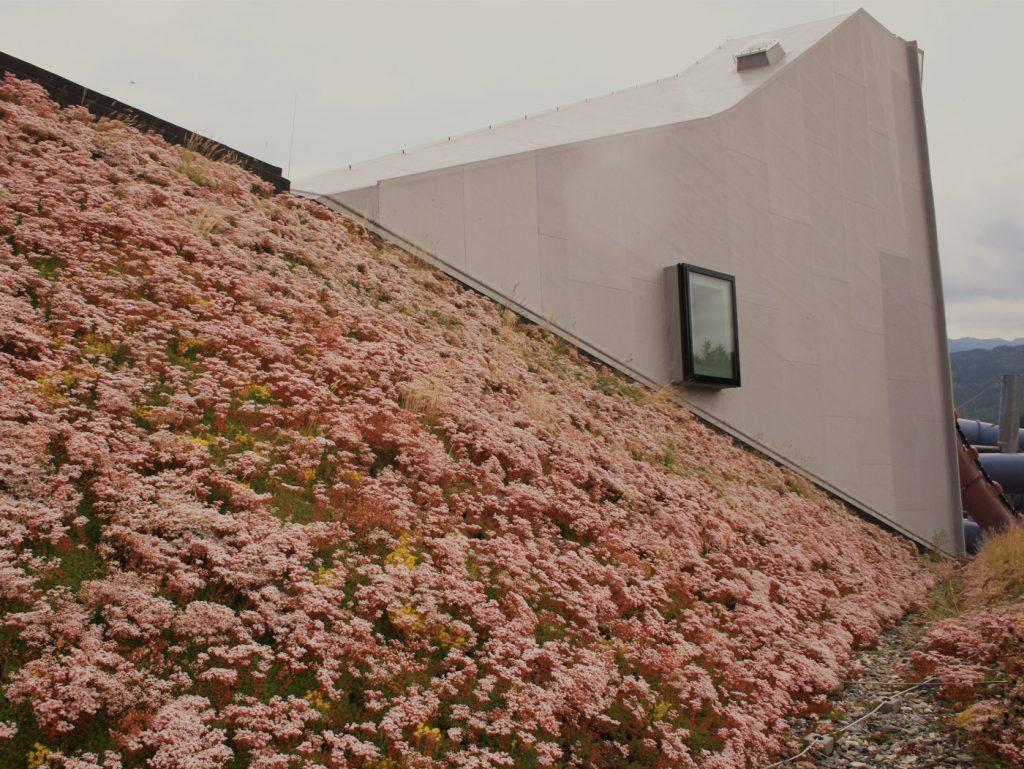 Dieses Bild zeigt eine extensive Dachbegrünung anhand eines Steildaches.
