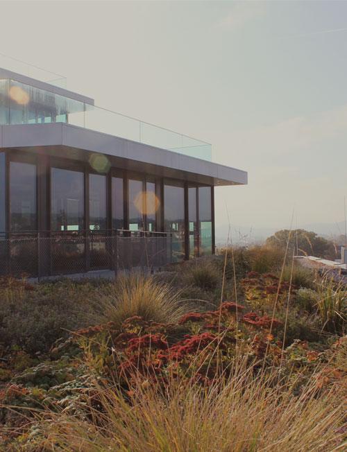 Beispielfoto einer extensiven Dachbegrünung.